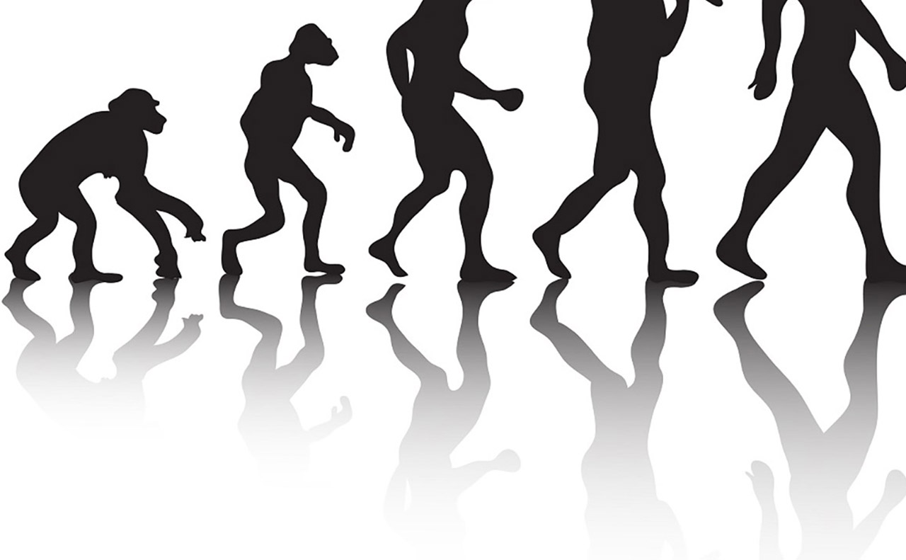 Depiction of human evolution in popular culture, wrongly implying that evolution is linear and progressive.